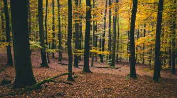 Herbstwald Hamburg