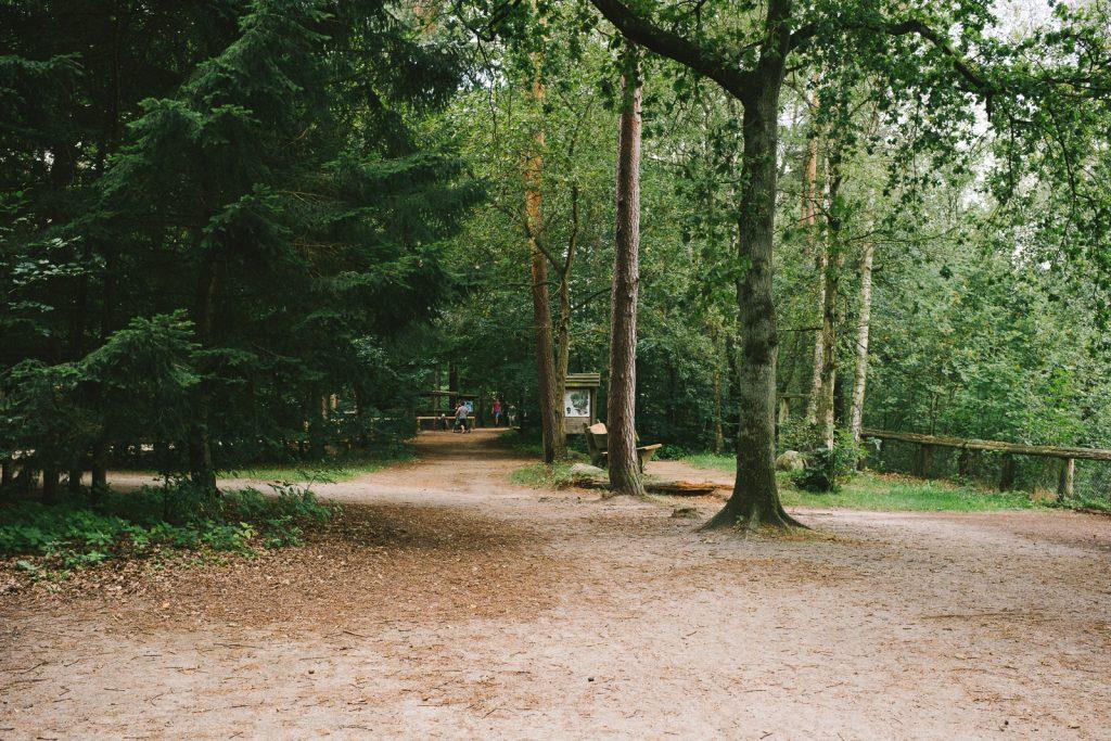 Kleine Waldschaenke Kloevensteen