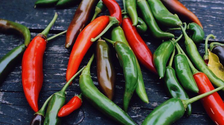 chili pflanze ernte fensterbank